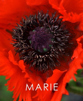 "'Marie"" - Book cover"